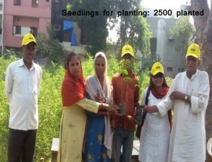 Seedlings for planting