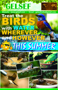gelsef_water_for_birds