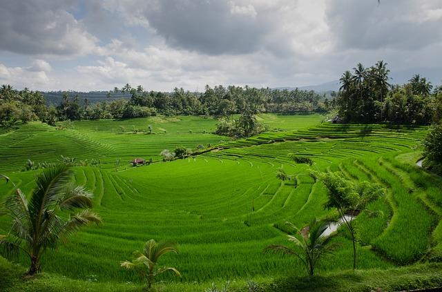 rice-terraces-384665_640